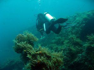 5 Great Dive Sites in Bali